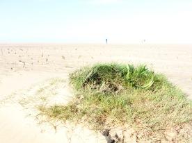 I found grass on the beach!