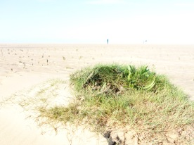 I found grass on the beach!