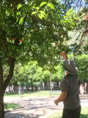 Luke picks an orange. It was revolting. He spat it out on the grass.