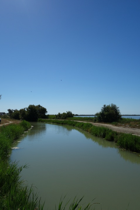 An uninspiring photo, but a lovely place. The Camargue, a national park on the Southernmost Mediterranean coast in France