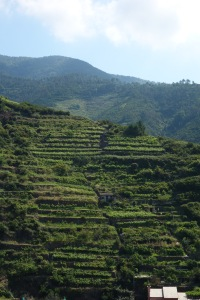 And there are terraced vineyards all around them.