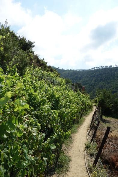 Prettiest hiking trail ever.