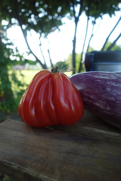 Oh you, silly Tuscan tomato!