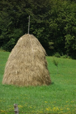 Best hay storage ever. If this were Dr Seuss it would stand up and walk away on spindly legs.