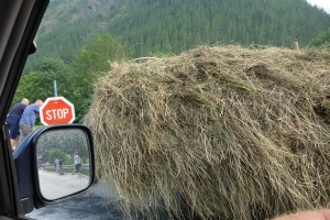 Our companion at the border. There's a person in the middle of that hay. He cut off a couple of cars and cut in line.