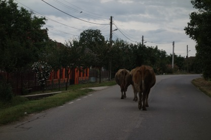 We encountered traffic whilst driving back from the forest.