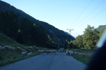 And, of course, waiting for sheep on the road after the hike