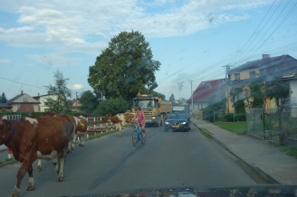 Getting through Poland - our first livestock traffic jam in this particular country