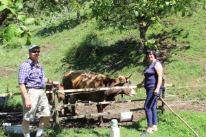 Dad and cows with our AirBnB host in Slovenia (near Lake Bled)