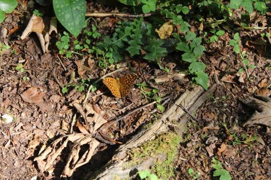 Pretty butterfly!