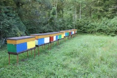This is how they do bee hives! They are all this pretty!