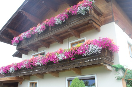 These type of flower boxes are everywhere. Don't you just want to eat it!