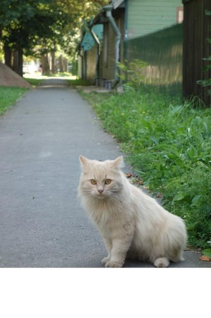 Kitty on the quiet suburban street.