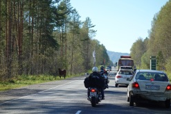 Entering the Altai with a horse and some motorbikes. The mountains are popular with Russian tourists too.