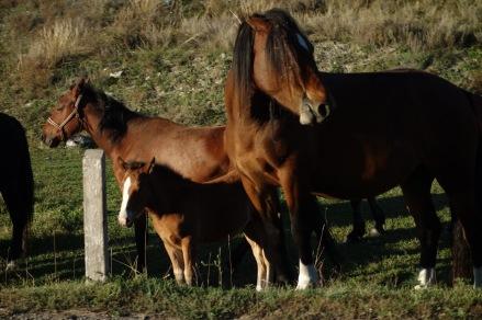 horse break!