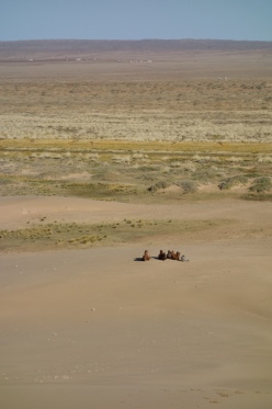 Camels from the top of the dunes.
