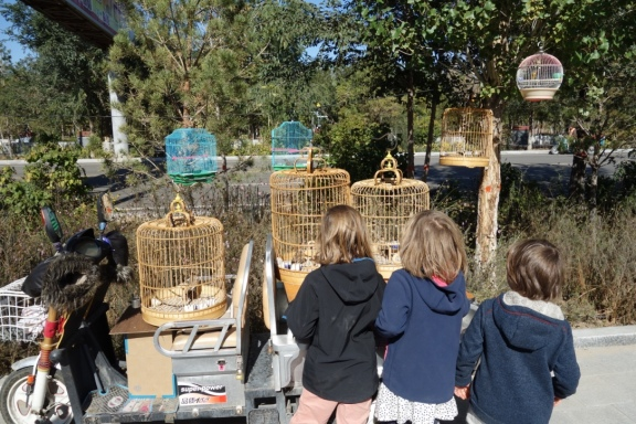 The kids in our group look at pet birds that are having their daily outside time (this is totally a thing.) An old lady came out and watched the kids nervously and eventually shoo'd them away.