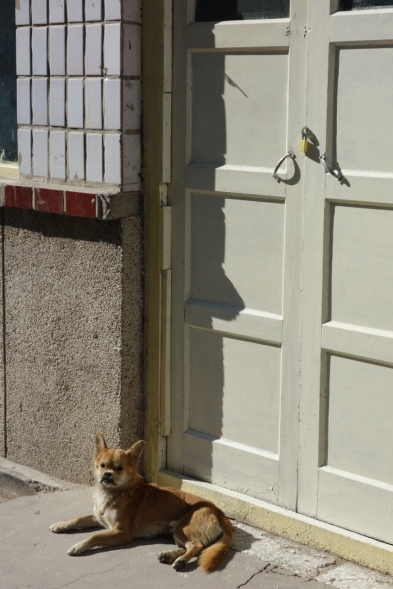 There are heaps and heaps of little dogs all over China. Look at this little fellow sunning himself.