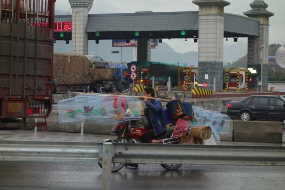 On the road to Chengdu - birds on the freeway (toll booth behind)