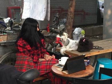 This fantastic person was sitting on the street in the hutong, watching Michael Jackson videos. Bless you, person, for making the world more interesting.