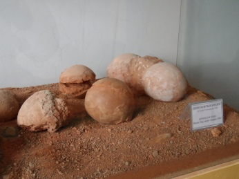 These are actual dinosaur eggs!