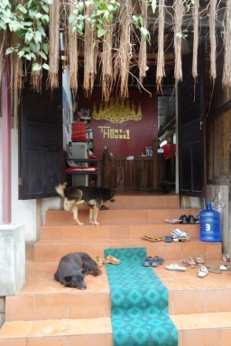 Our guesthouse and its friendly doggies.