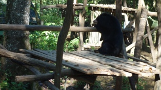 The bears had very creative lounging postures.