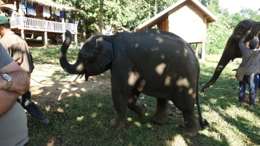 Baby Surya is led out of the pool by his caring mahout