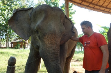 Luke pets another elephant. There are 12 at the centre.
