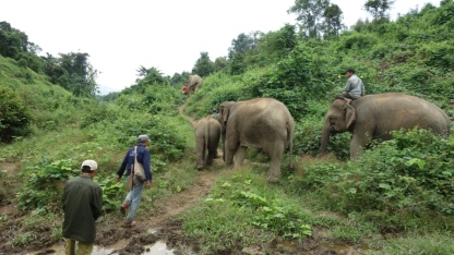 """Some of the elephants take their turn to go into the """"socialisation area"""", which is just a big jungle area where they get to do whatever they want."""