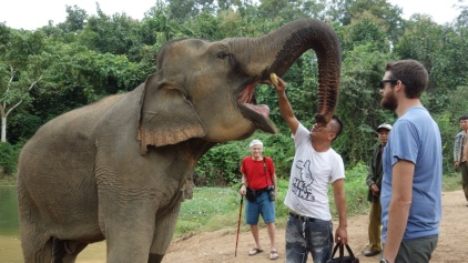 The elephants are super, super gentle. Our guide, Mr. Lah, checks out the elephant's teeth with a banana trick.