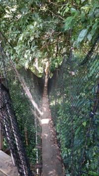 A terrifying sway bridge taking us to an observation platform over the socialisation area.