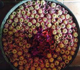 Beautiful floral arrangements at the resort - using invasive lantana for good
