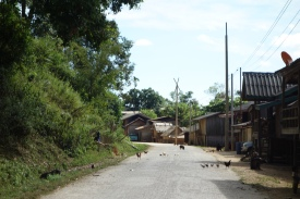 A very typical scene while driving in Laos. Animals EVERYWHERE. It's like a farm up there.