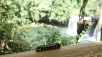 Caterpillar, why aren't you facing the view?