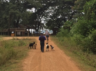 Goats and herder following Luke