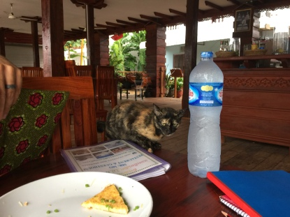 This cat would not eat any omelette, but it did like to chill.