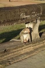 Pause for monkey with balls in golden hour