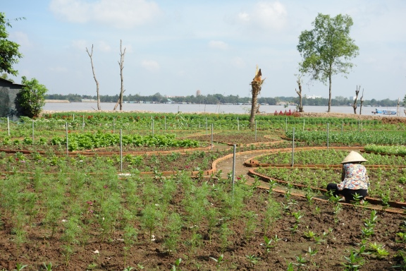 Planting a new tourist garden