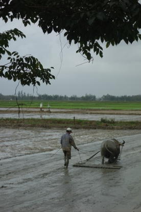 Still on our bike ride - a fellow works the rice fields