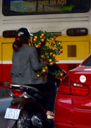 We were in Hanoi and Ha Long Bay just before and during Tet, the biggest holiday of the year. Folks get yellow and orange flowers and fruit trees for their homes during this time. Hence, lots of orange trees on mopeds.