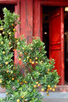 And orange trees.