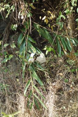 An unexpected fellow on our walk up to a nice viewpoint on Cat Ba Island.