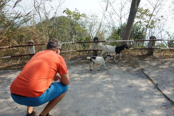 Luke attempts to get the baby goat to hug him.